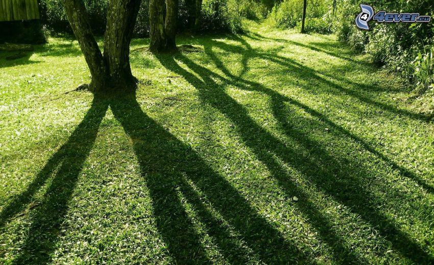 árbol de sombra, árboles, hierba