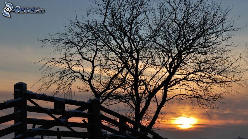 árbol deshojado, cerco de madera, nieve, puesta del sol