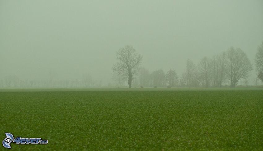 árbol en niebla, prado, árboles