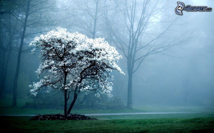árbol florido, niebla
