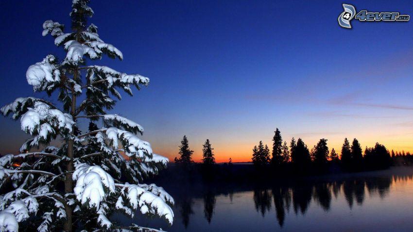 árbol nevado, siluetas de los árboles, río
