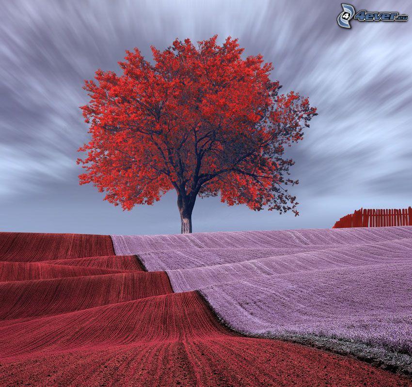 árbol otoñal, campo, flores