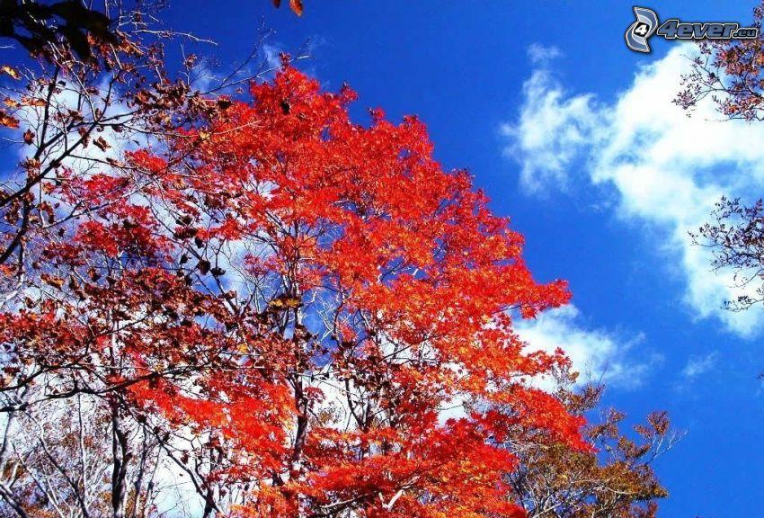 árbol otoñal
