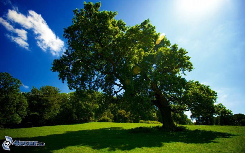 árbol ramificado, prado verde