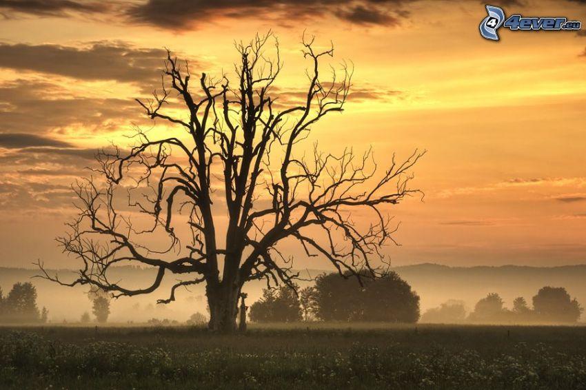 árbol seco, prado, después de la puesta del sol, cielo anaranjado
