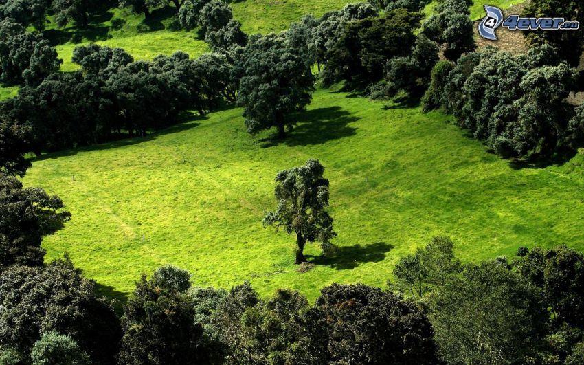 árbol solitario, árboles
