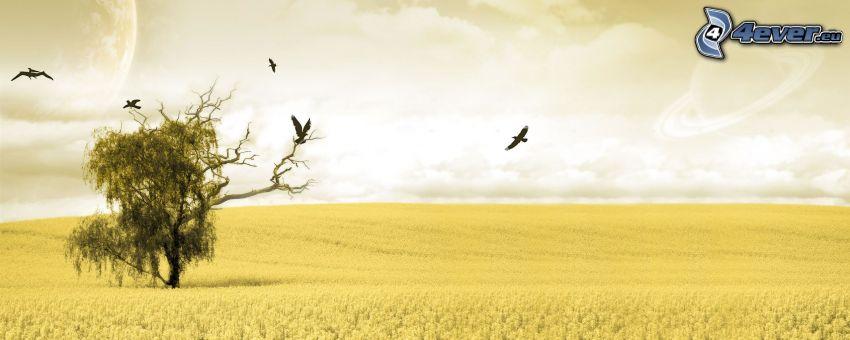 árbol solitario, campo, panorama