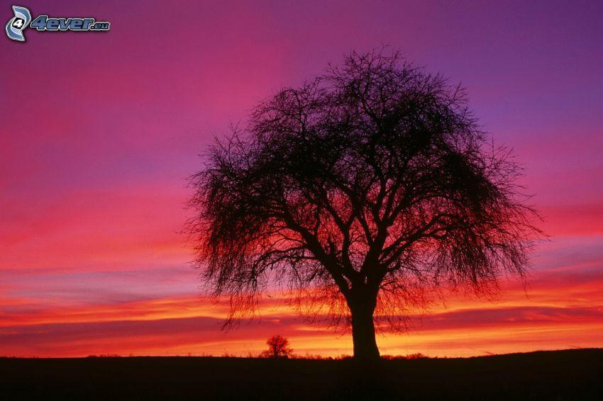 árbol solitario, después de la puesta del sol, silueta de un árbol, cielo púrpura