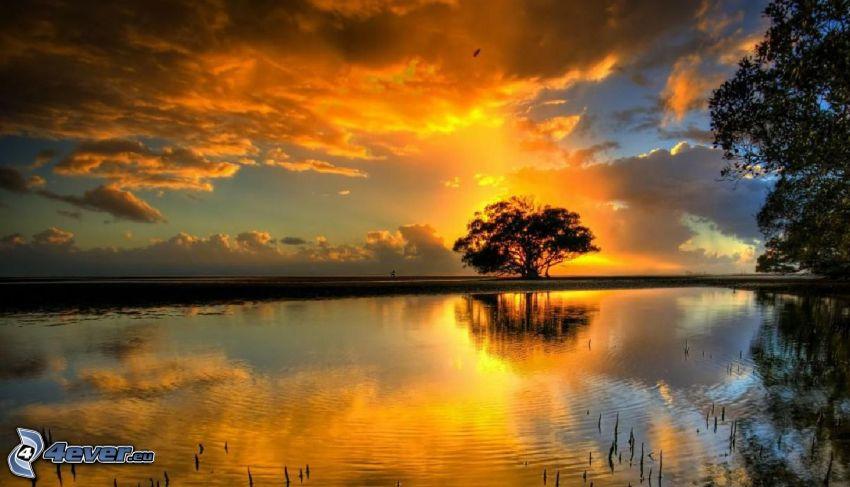 árbol solitario, mar, nubes