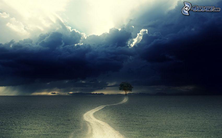 árbol solitario, nubes, prado, camino