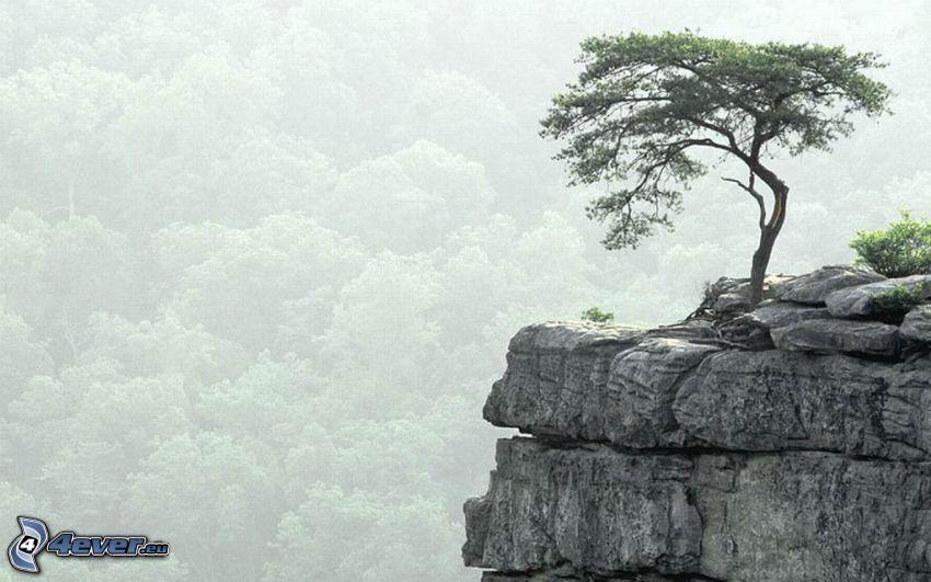 árbol solitario, piedra, arrecife