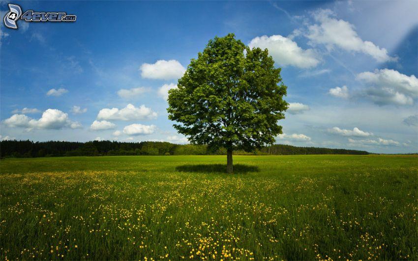 árbol solitario, prado, flores amarillas, nubes