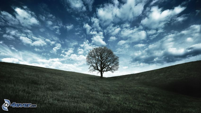 árbol solitario, prado, nubes