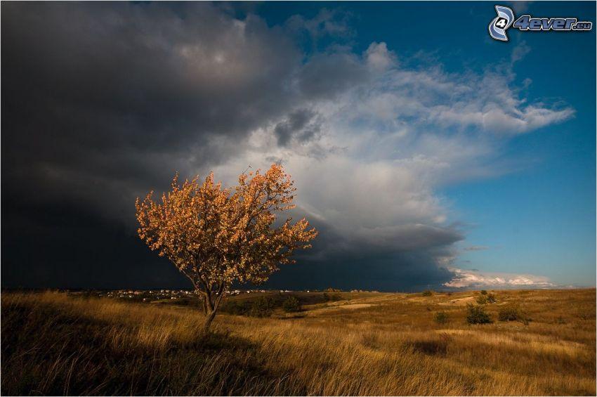 árbol solitario, prado, nubes oscuras