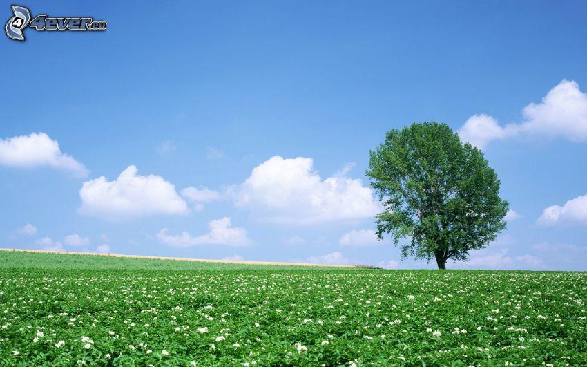 árbol solitario, prado
