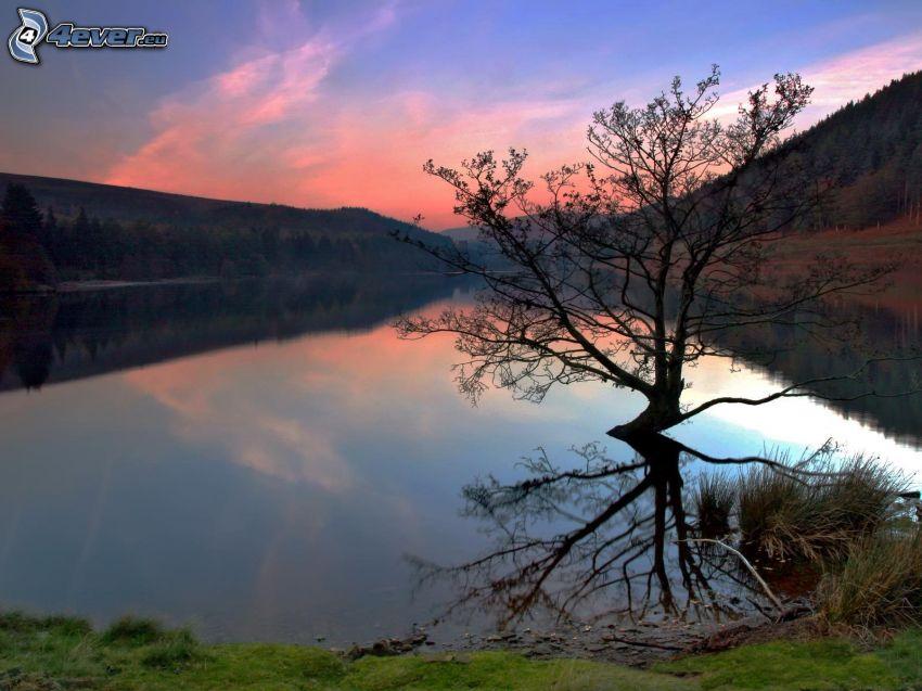 árbol solitario, río, bosque