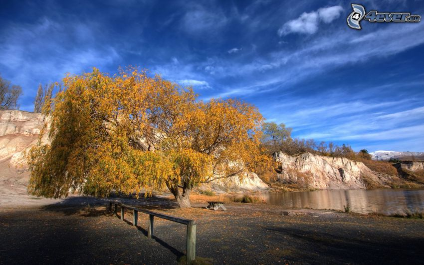árbol solitario, roca, lago