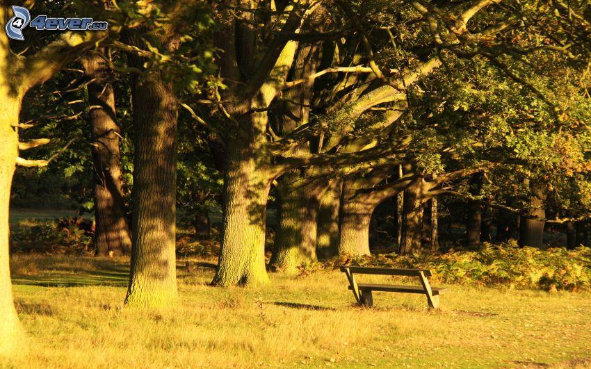árboles, banco