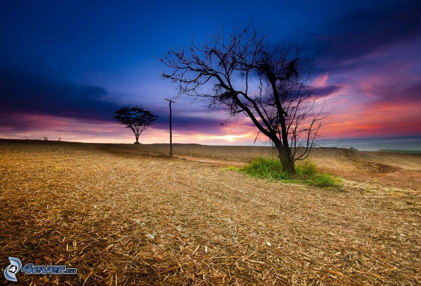 árboles, campo, cielo de la tarde