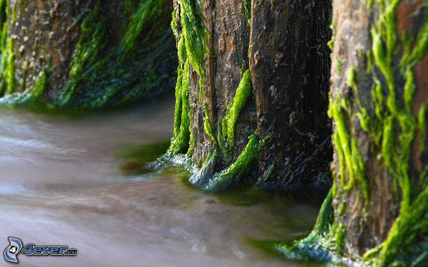 árboles, corteza de árbol, musgo, río