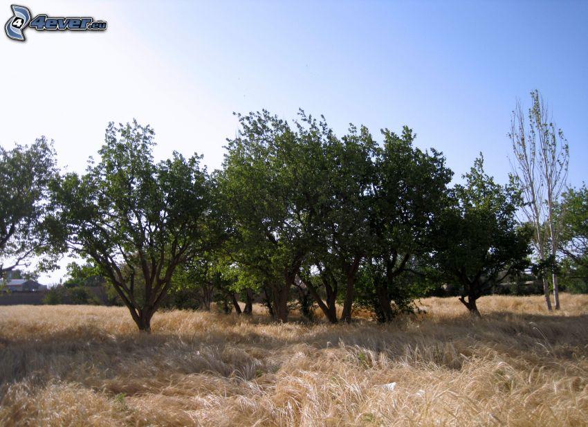 árboles, hierba seca