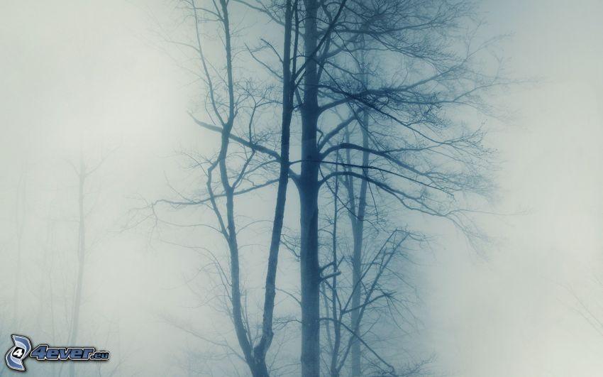 árboles, niebla