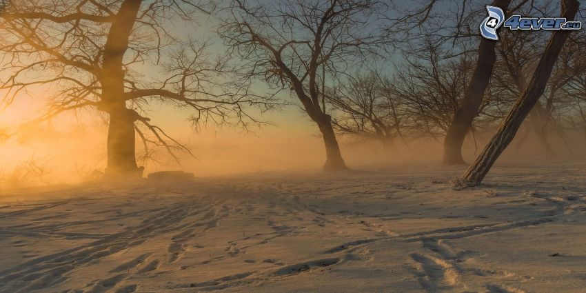 árboles, nieve, rayos de sol, huellas en la nieve