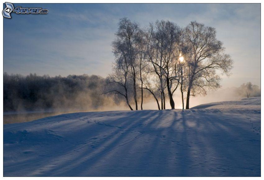 árboles, nieve