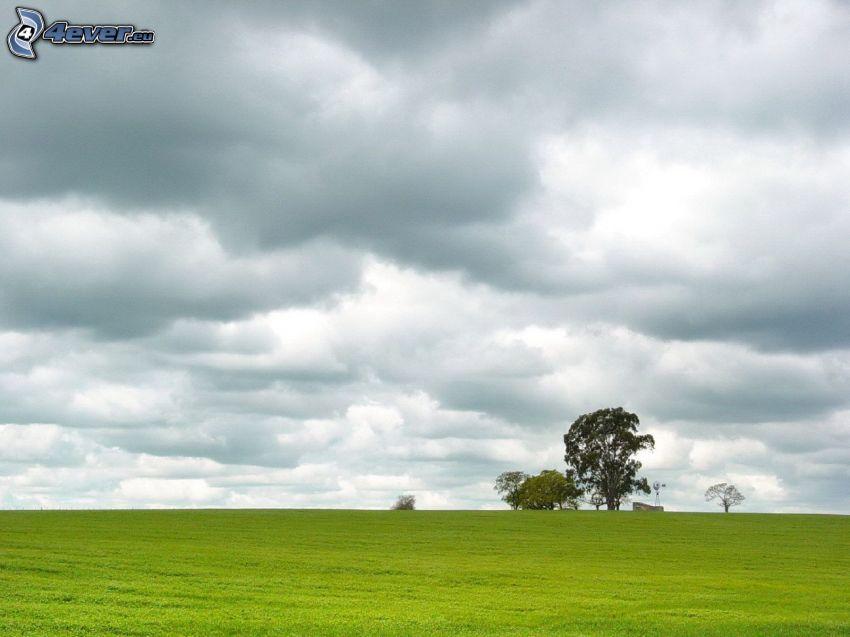 árboles, nubes, prado