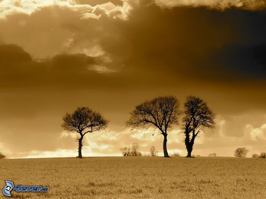 árboles, nubes, sepia