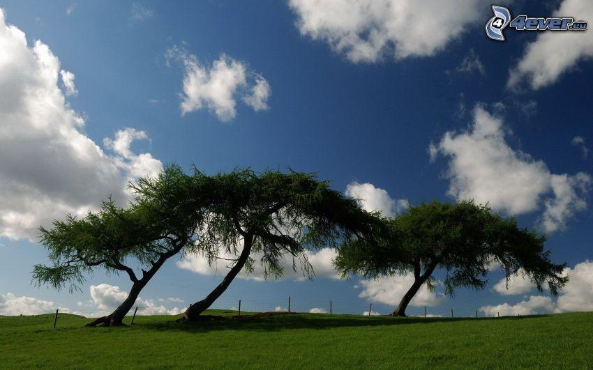 árboles, nubes