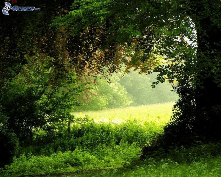árboles, prado, verde