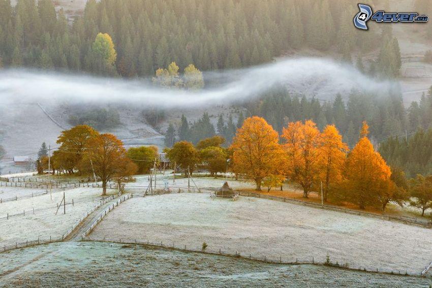 árboles amarillos, nieve, bosques de coníferas