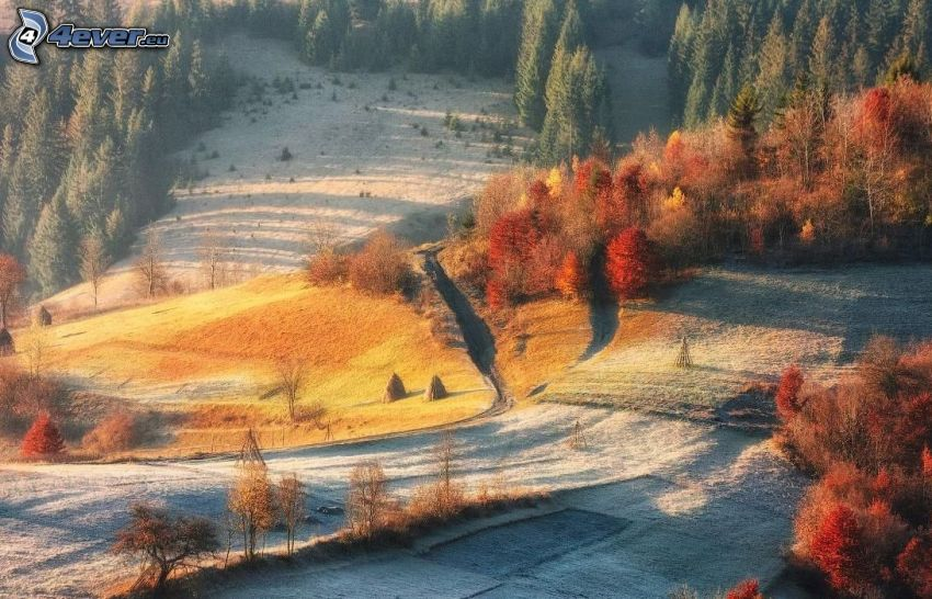 árboles coloridos del otoño