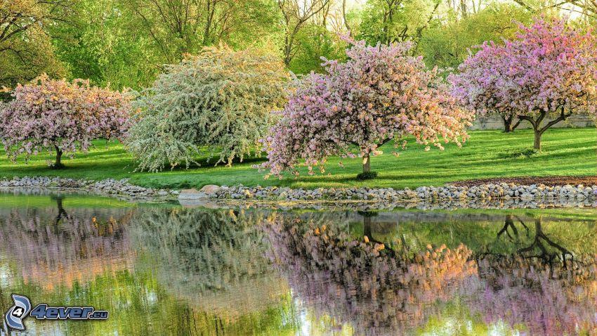 árboles en flor, río