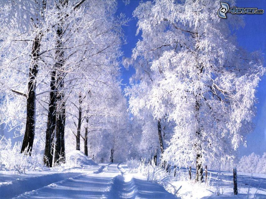 árboles nevados, camino cubierto de nieve