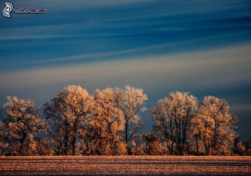 árboles nevados, cielo