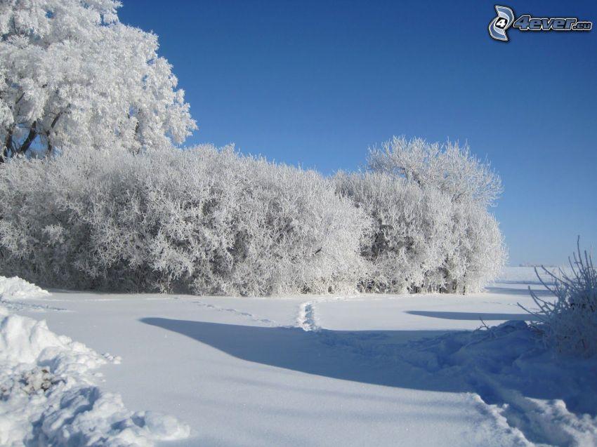 árboles nevados, huellas en la nieve