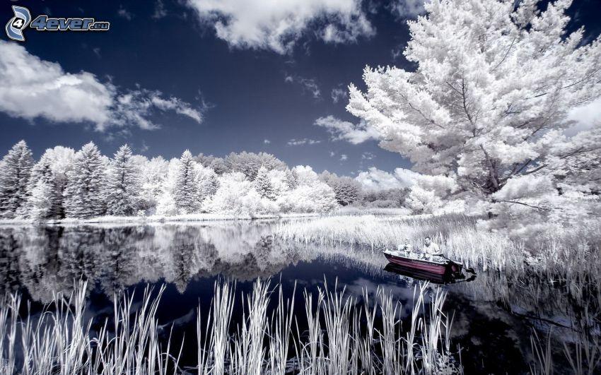 árboles nevados, lago, nubes