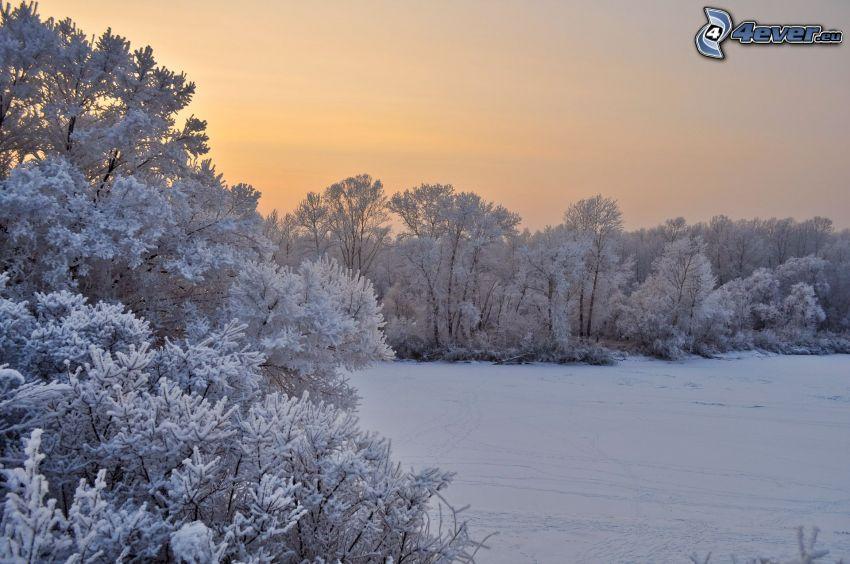 árboles nevados, prado cubierto de nieve, después de la puesta del sol