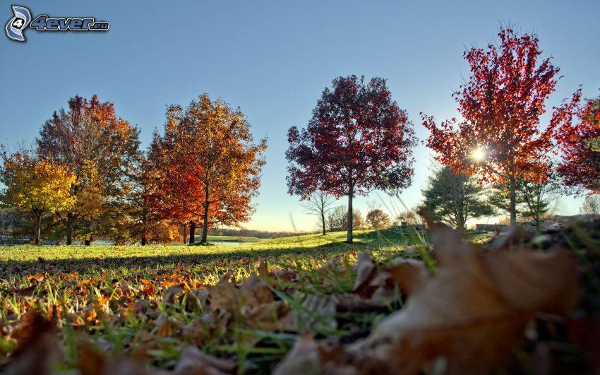 árboles otoñales, hojas de otoño