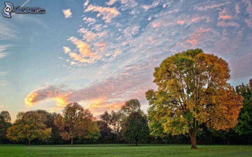 árboles otoñales, nubes, césped