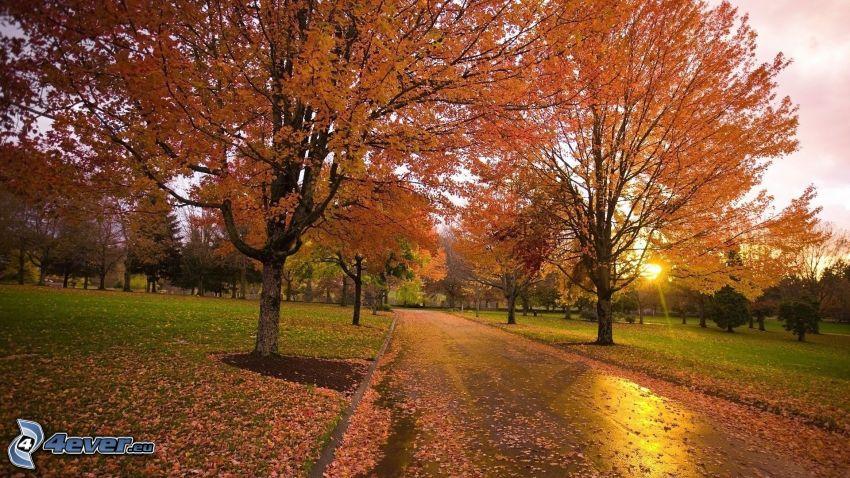 árboles otoñales, puesta del sol, camino