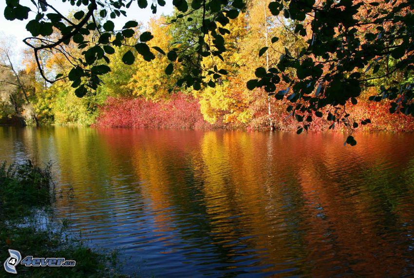 árboles otoñales, río