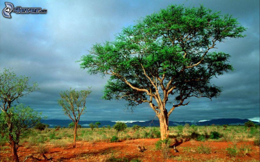 árboles solitarios, estepas, nubes oscuras