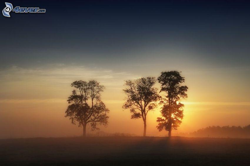 árboles solitarios, siluetas de los árboles, salida del sol