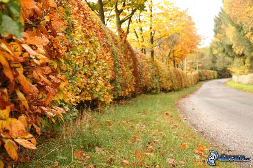 Arbustos, árboles otoñales, camino