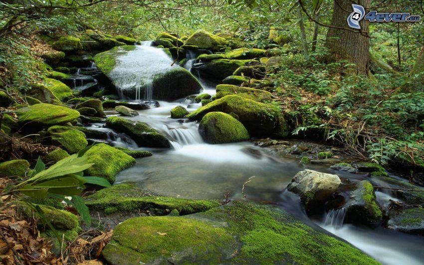 arroyo de bosque salvaje, rocas, musgo