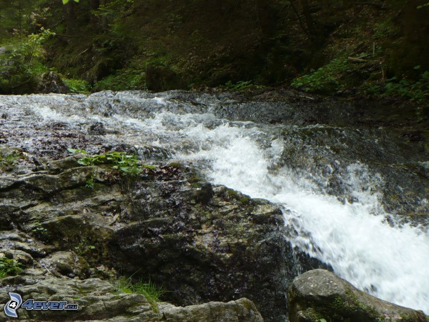 arroyo de bosque salvaje, rocas