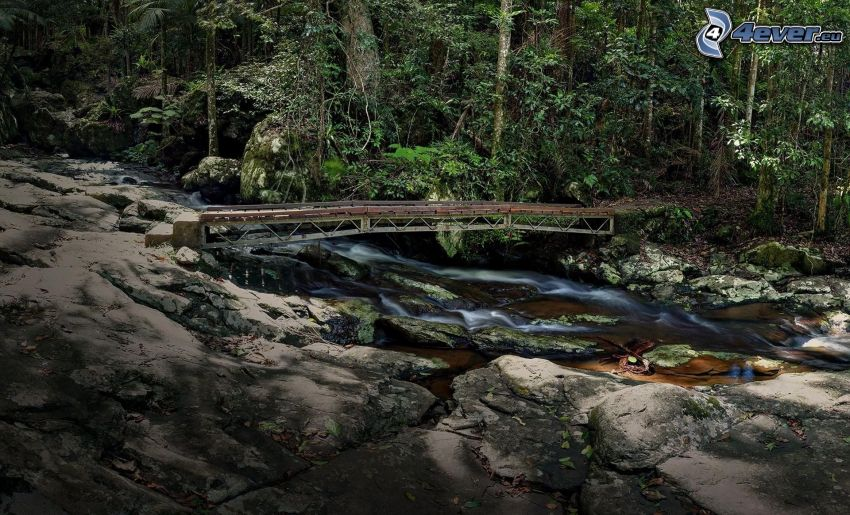 arroyo en el bosque, puente, rocas